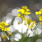 CANON Canon EOS Kiss Digital Xで撮影した植物(Spring is coming)の写真(画像)