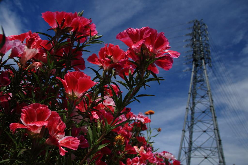 フラワー、鉄塔と青い空