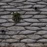 OLYMPUS E-420で撮影したインテリア・オブジェクト(Wall)の写真(画像)