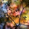秋の影絵2013