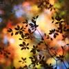 秋の影絵2012