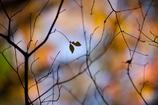 秋の影絵2017