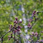 PENTAX PENTAX K200Dで撮影した植物(やっと。)の写真(画像)
