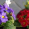 PENTAX PENTAX K200Dで撮影した植物(鮮やかに)の写真(画像)