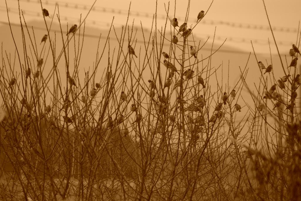 すずめの木