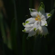 PENTAX PENTAX K200Dで撮影した植物(花の主張)の写真(画像)