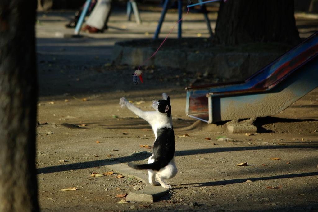 不忍池の猫