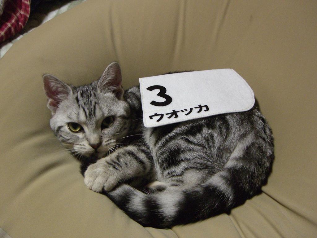 ダービー猫