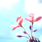 FUJIFILM FinePix S5Proで撮影した植物(空を見上げるピンクの花)の写真(画像)