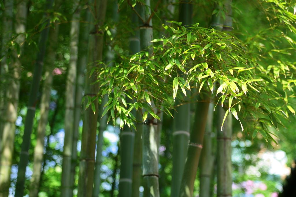 2009 鎌倉