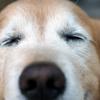 犬のいい顔