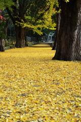積田神社 黄葉