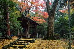 積田神社 紅葉