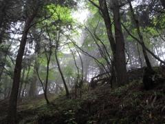 山上ヶ岳 1
