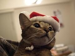 サンタさん来るかな