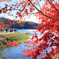 秋を愛でる