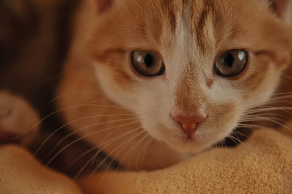 猫に見られて