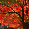 晴れた秋の日