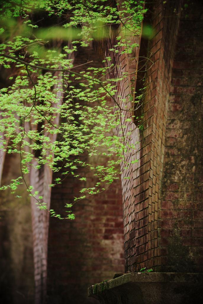 水路閣の新緑
