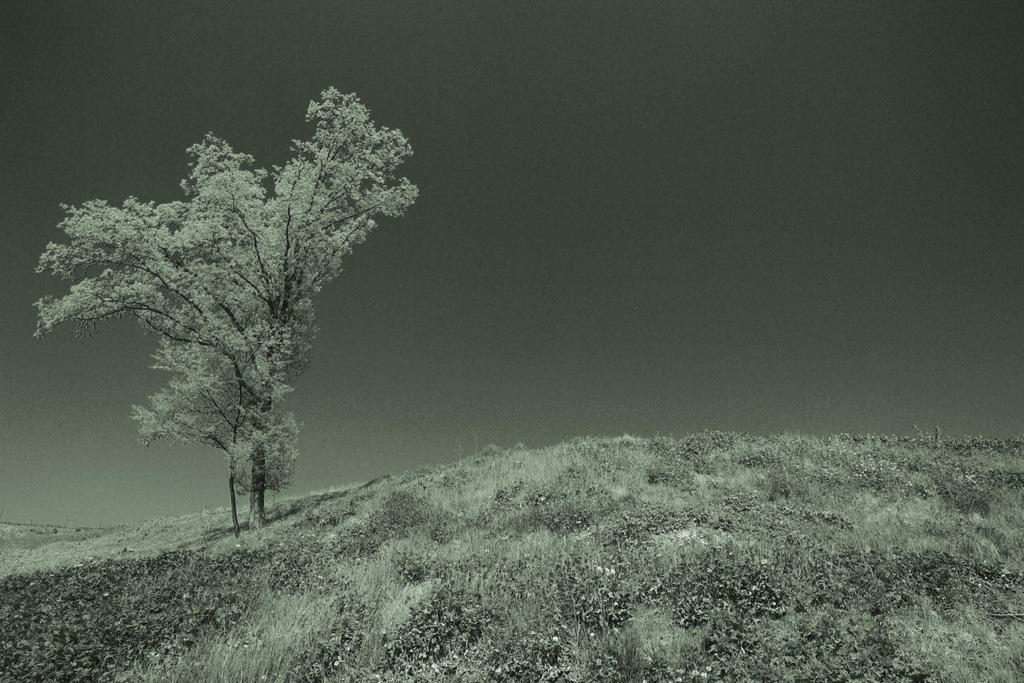 颯爽たる木
