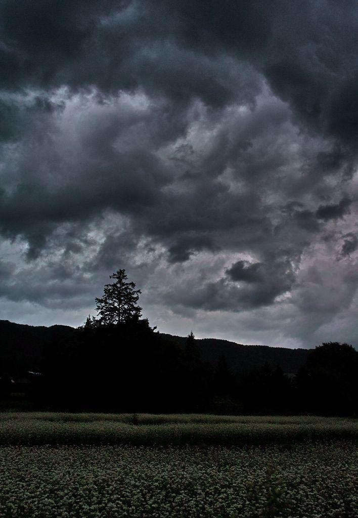 妖しい雲と蕎麦の花