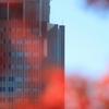 大都会の紅葉