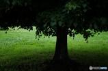 梅雨空の木陰