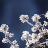 霜の花とクモの糸