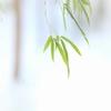 小さな竹林