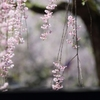 春の喜び Ⅱ