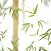 今年の隣の竹