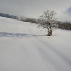 NIKON COOLPIX P5000で撮影した風景(ゲレンデの木)の写真(画像)