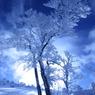 CANON Canon EOS 20Dで撮影した風景(マイナス13℃の朝)の写真(画像)