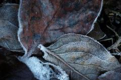 強い霜の朝