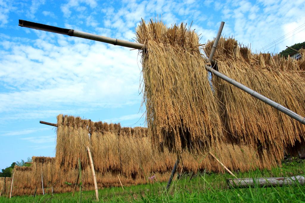 稲干しのある風景