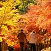 人生の秋 照紅葉の道を歩みゆく・・
