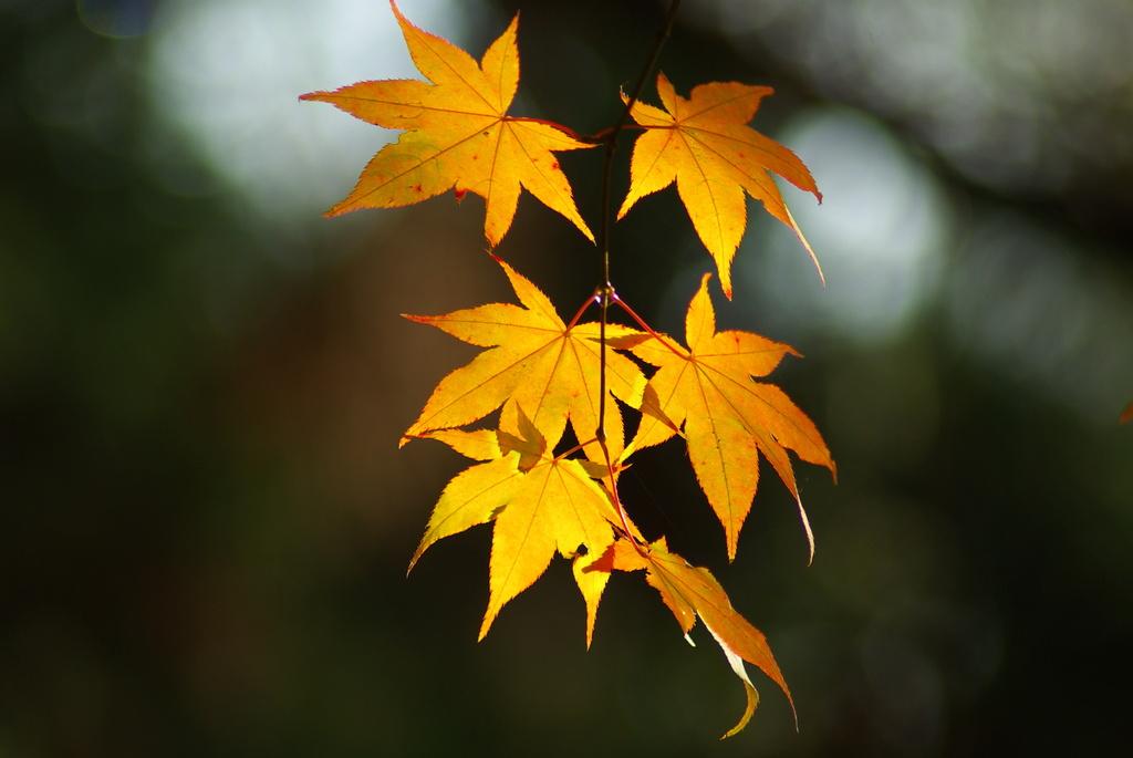 秋ゆく・・
