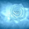 Blue rose dream