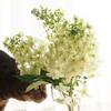柏葉紫陽花 と ねこ