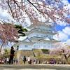 満開桜城2