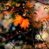 終の秋・・