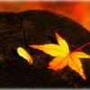 切り株をまくらに秋の夢・・