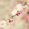朧な春待ちわびて