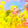まぶしい春満開