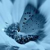モノトーンの蝶