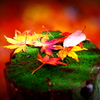 一秋の夢1