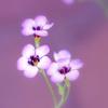 はやくこい花の咲く季節