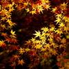秋のハート ♡