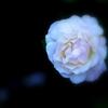 Pure white1