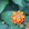 オレンジの不思議な花